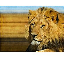 Big five: Lion Photographic Print