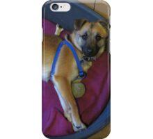 Floortje, my new little dog iPhone Case/Skin
