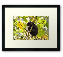 Gorilla Baby, Uganda Africa Framed Print