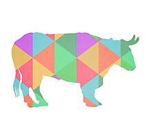 Bull Cow Triangles Photographic Print