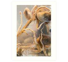 Live Octopus Art Print