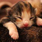 Kitten  by adamegraver