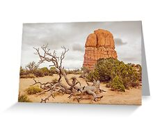 Fallen Tree - Arches National Park Greeting Card