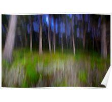 Carmel Cypress Trees Poster