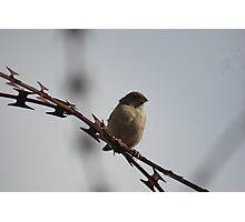 Lonely Bird Photographic Print