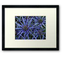 BLUE SPIKY SEA HOLLY Framed Print