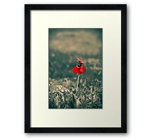Lonely Red Flower Framed Print