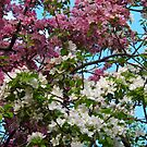 When Spring has sprung by MarianBendeth