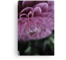 flower close up six Canvas Print