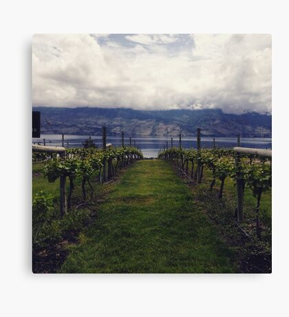 Young Vineyard Canvas Print
