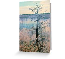 Shark Valley Cypress Greeting Card