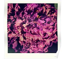 dry purple flower - 2nd Poster