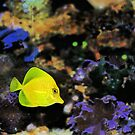 Zaks Fish by ggpalms