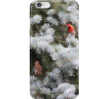 Apartment Hunting  Bird Style iPhone Case/Skin