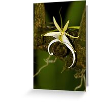 The Elusive Ghost Orchid Greeting Card