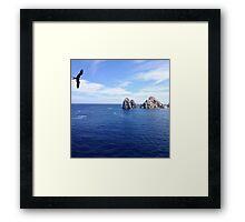 Bird flies over Cabo San Lucas, Mexico Framed Print