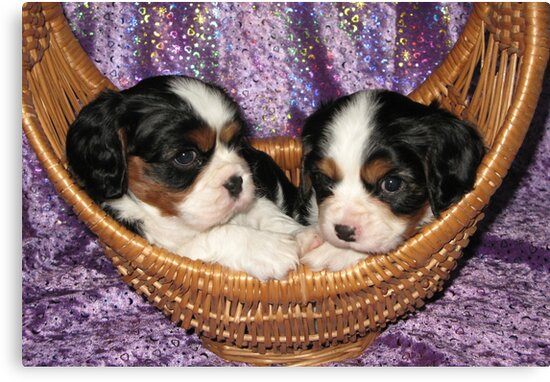 Cavalier Pups In Basket by Jenny Brice