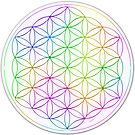 Flower of Life - White Rainbow by haymelter