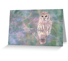 Barred Owl Pastel Oil Painting Greeting Card