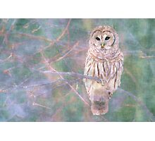 Barred Owl Pastel Oil Painting Photographic Print