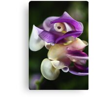 In A Twist Corkscrew Flower Canvas Print