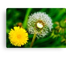 Spring and dandelion Canvas Print