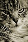 LE CHAT II by Leny .