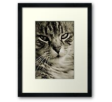 LE CHAT II Framed Print
