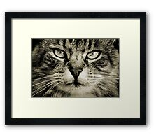 LE CHAT III Framed Print
