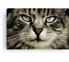 LE CHAT III Canvas Print