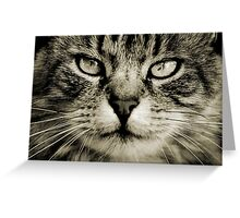 LE CHAT III Greeting Card