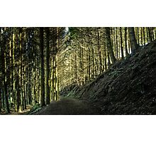 Deep Forest Photographic Print