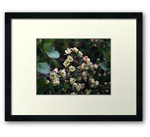 EXQUISITE TINY CREAM & PINK BERBERIS FLOWERS Framed Print