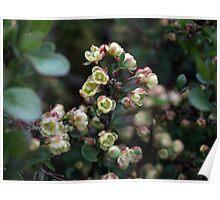 EXQUISITE TINY CREAM & PINK BERBERIS FLOWERS Poster