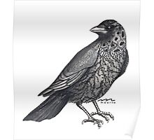The Jackdaw Poster
