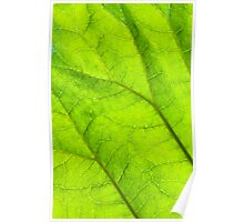 Green leaf macro Poster