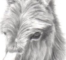 Cute donkey foal Sticker