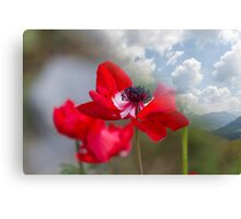 landscape rocky mountain and poppy Canvas Print