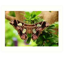 Silk Moth Art Print