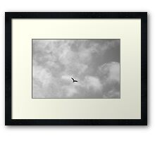 Flying bird Framed Print