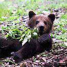 Baby Bear by Jo Nijenhuis