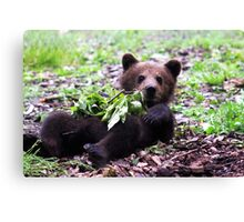 Baby Bear Canvas Print