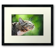 The Scent of Summer Framed Print