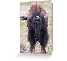 Upset Bull Bison Greeting Card