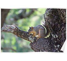 Tree Hugging Squirrel Poster