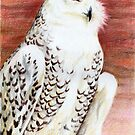 Winter's Day Dusk: Snow Owl by Aakheperure