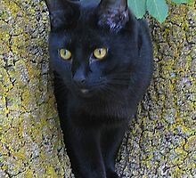 Black Cat In A Tree by Jenny Brice