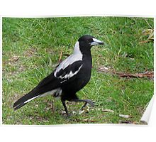 Marching Magpie Poster