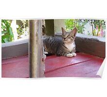 Pondering Cat Poster