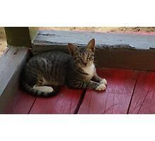 Adorable Cat Photographic Print